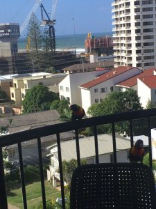 broadbeach painters